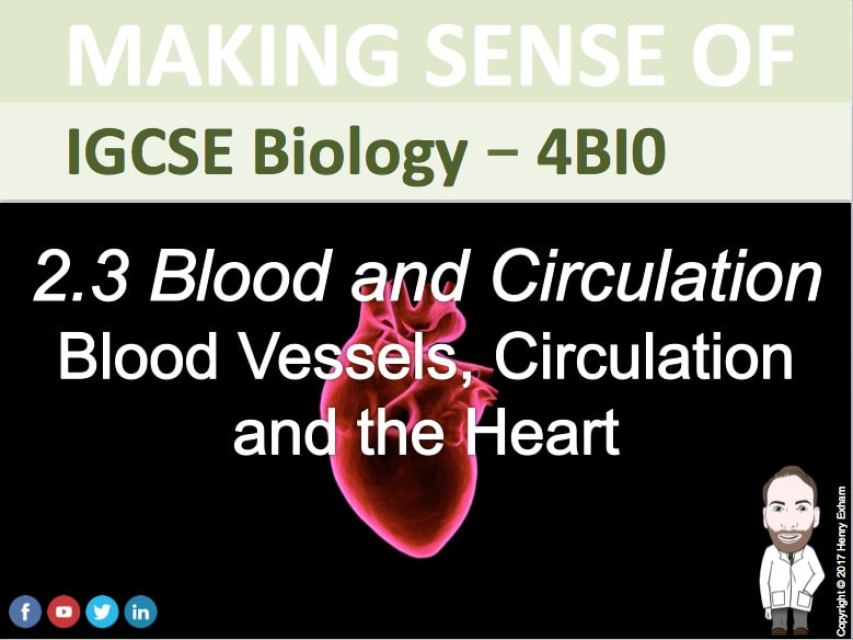 igcse biology coursework on pulse rate
